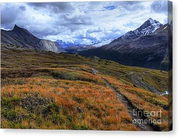 Views Hiking Wilcox Pass 3 Canvas Print by Wayne Moran
