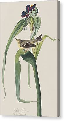 Vigor's Warbler Canvas Print by John James Audubon