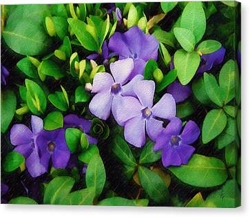 Canvas Print featuring the photograph Vinca by Sandy MacGowan