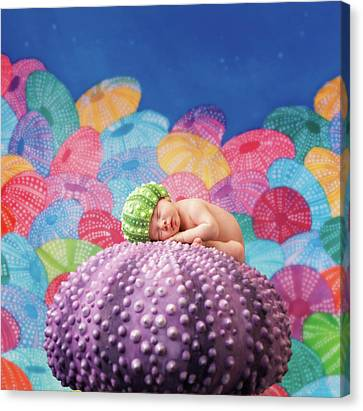Vince As A Sea Urchin Canvas Print
