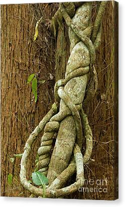 Canvas Print featuring the photograph Vine by Werner Padarin