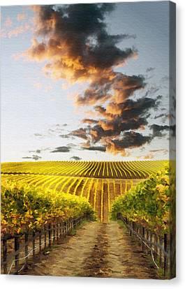 Vineard Aglow Canvas Print