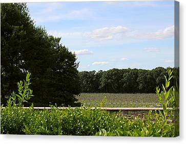 Vines Canvas Print - Harvest by Brian Manfra
