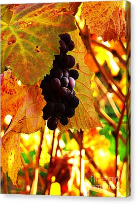 Vineyard 20 Canvas Print by Xueling Zou
