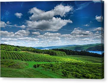 Keuka Lake Canvas Print - Vineyard And Lake by Steven Ainsworth