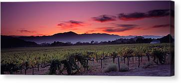 Vineyard At Sunset, Napa Valley Canvas Print by Panoramic Images