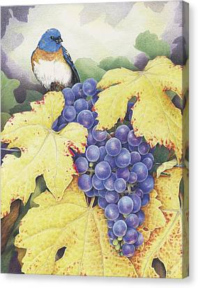 Vineyard Blue Canvas Print by Amy S Turner