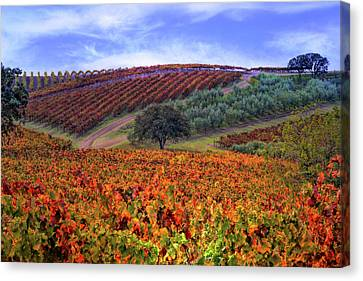 Vineyard Color Canvas Print by Stephanie Laird