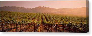Vineyard Geyserville Ca Usa Canvas Print by Panoramic Images