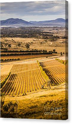 Wine Scene Canvas Print - Vineyard Harvest Landscape by Jorgo Photography - Wall Art Gallery