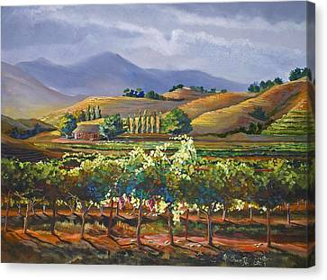 Vineyard In California Canvas Print by Heather Coen