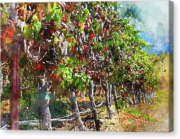 Vineyard In Napa Valley California During The Fall Canvas Print by Brandon Bourdages