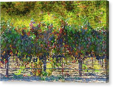 Vineyard In Napa Valley California In Autumn Canvas Print by Brandon Bourdages