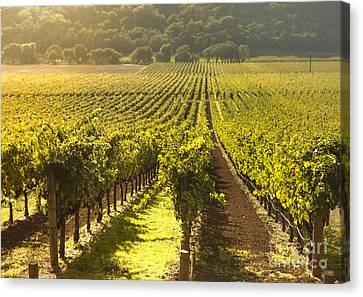 Grape Vines Canvas Print - Vineyard In Napa Valley by Diane Diederich