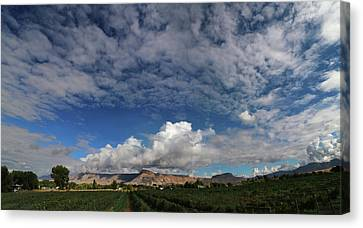 Vineyard Canvas Print by Jerry LoFaro
