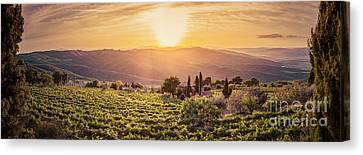 Vineyard Landscape Panorama In Tuscany, Italy. Wine Farm At Sunset Canvas Print by Michal Bednarek