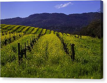 Vineyard Mustard Canvas Print by Garry Gay