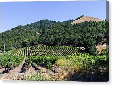 Vineyard Outside Santa Rosa California Canvas Print