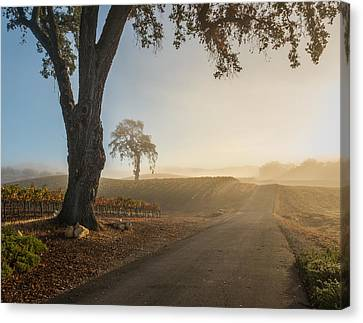 Vineyard Road Canvas Print by Joseph Smith
