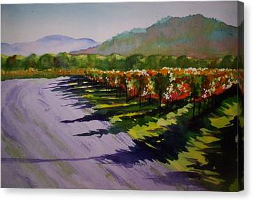 Vineyard Shadows Canvas Print by Becky Chappell