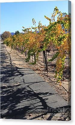 Vineyard Shadows Canvas Print