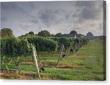 Vineyard With  Barn Canvas Print by Steve Gravano
