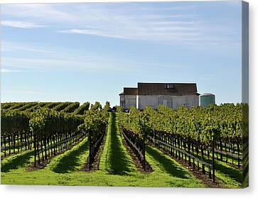 Vineyard With Old Barn Canvas Print