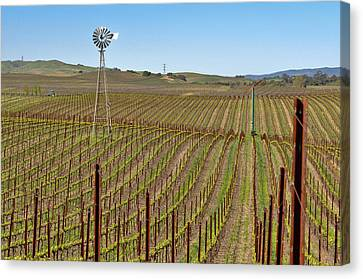 Vineyard With Windmill And Blue Sky Canvas Print by Brandon Bourdages