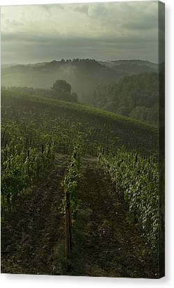 Vineyards Along The Chianti Hillside Canvas Print by Todd Gipstein
