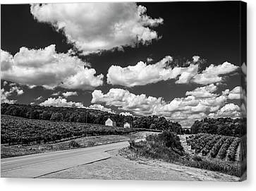 Vineyards In Summer II Canvas Print by Steven Ainsworth