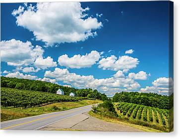 Canvas Print featuring the photograph Vineyards In Summer by Steven Ainsworth