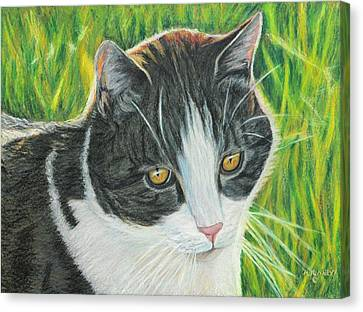 Vinny In Late Afternoon Canvas Print by Angela Finney