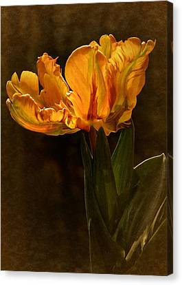 Canvas Print featuring the photograph Vintage 2017 Tulip by Richard Cummings