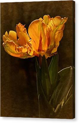Vintage 2017 Tulip Canvas Print by Richard Cummings