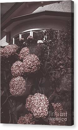 Vintage Bayview Window Surrounded By Red Flowers Canvas Print by Jorgo Photography - Wall Art Gallery