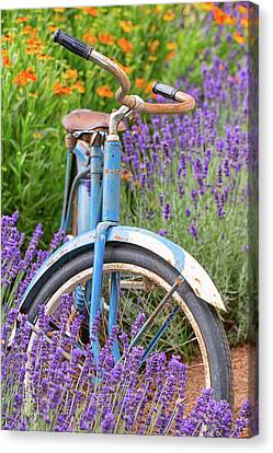 Canvas Print featuring the photograph Vintage Bike In Lavender by Patricia Davidson