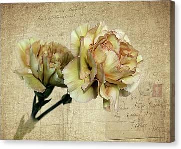 Vintage Carnations Canvas Print