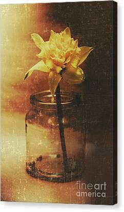 Vintage Daffodil Flower Art Canvas Print