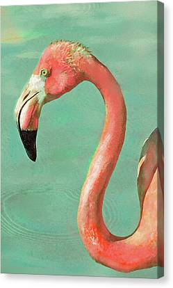 Vintage Flamingo Canvas Print by Jane Schnetlage