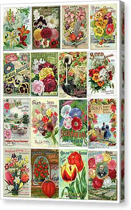 Vintage Flower Seed Packets 1 Canvas Print
