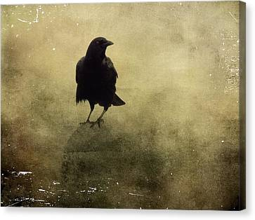 Vintage Fog Crow Canvas Print by Gothicrow Images