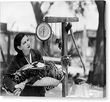 Vintage Holiday Card   Woman Weighing A Turkey Ahead Of The Holidays Canvas Print by American School