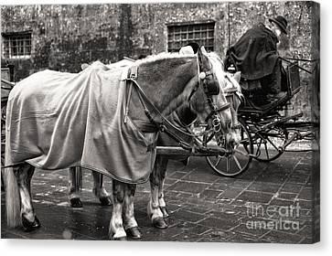Vintage Horses In Salzburg Canvas Print