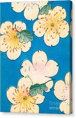 Vintage Japanese Illustration Of Dogwood Blossoms Canvas Print by Japanese School