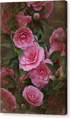 Vintage March 2017 Camillias No. 2 Canvas Print by Richard Cummings