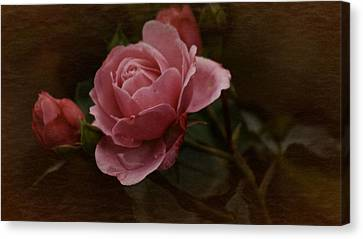 Canvas Print featuring the photograph Vintage October Pink Rose by Richard Cummings