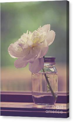 Canvas Print featuring the photograph Vintage Peony Flower Still Life by Edward Fielding