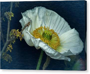 Vintage Poppy 2017 No. 2 Canvas Print by Richard Cummings