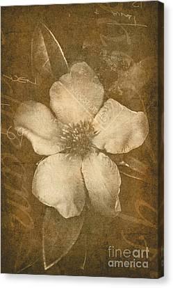 Vintage Postcard Flower Canvas Print by Jorgo Photography - Wall Art Gallery