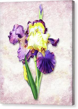 Canvas Print featuring the painting Vintage Purple Watercolor Iris by Irina Sztukowski